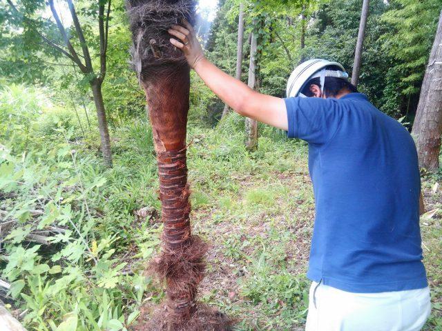 シュロの木と渡邉監督。密林の開拓者みたいでかっこいい!