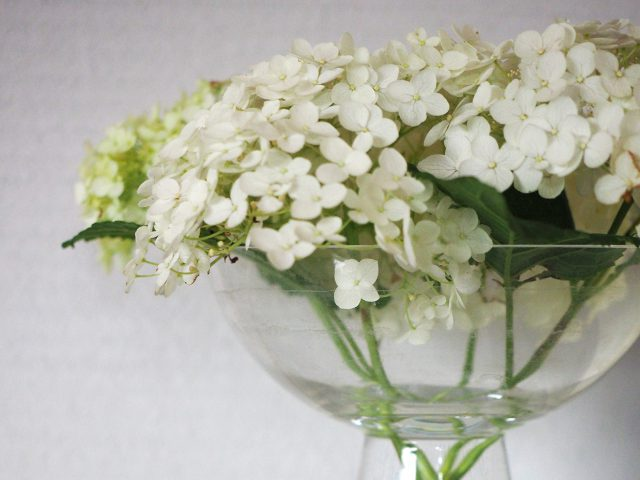 庭から摘んで綺麗に飾られた白いアジサイ。