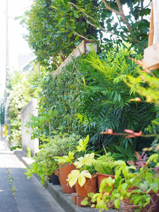 小林賢二アトリエの植栽