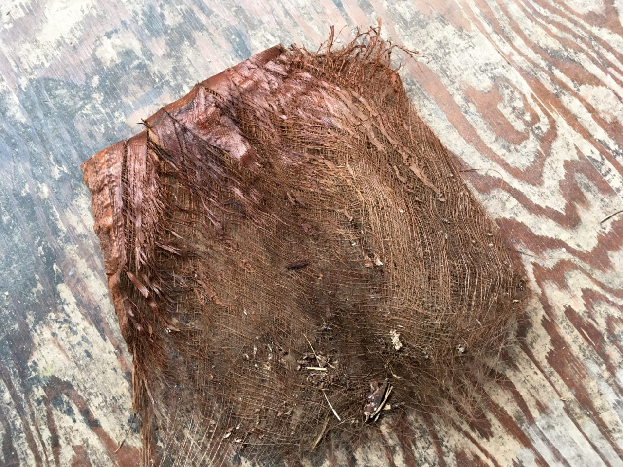 木から剥がした状態のシュロの樹皮。繊維が絡み合っています