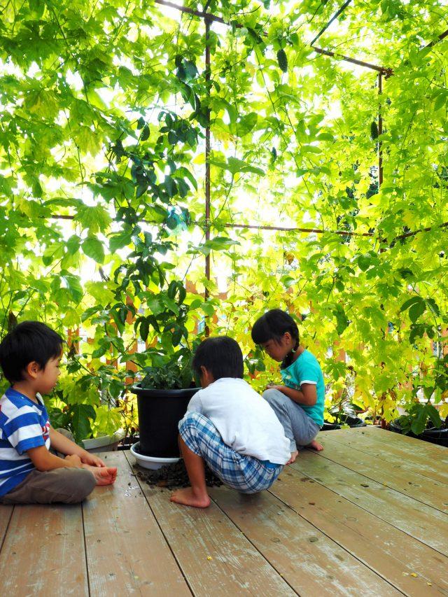 羽村市グリーンカーテンコンテスト で優秀賞を受賞した緑のカーテン