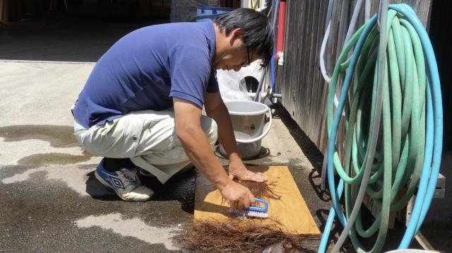 樹皮を水でほぐして研いでいる様子。この段階で繊維がいくつかは取れていくため、採集した全ての繊維が使える訳ではありません