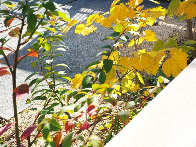 きれいに紅葉した植栽