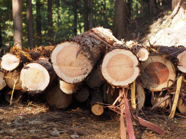 東京の多摩産材や秩父の山の木、和歌山の紀州産材が相羽建設の木の家に用いられているそうです。