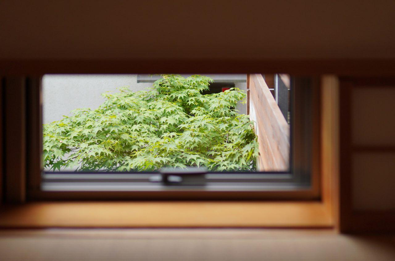 小上がりの小窓からのぞくヤマモミジ