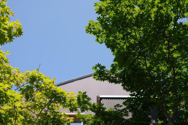 シンボルツリーのヤマモミジが青空に映える