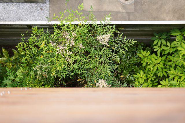 バルコニーから見下ろした庭。