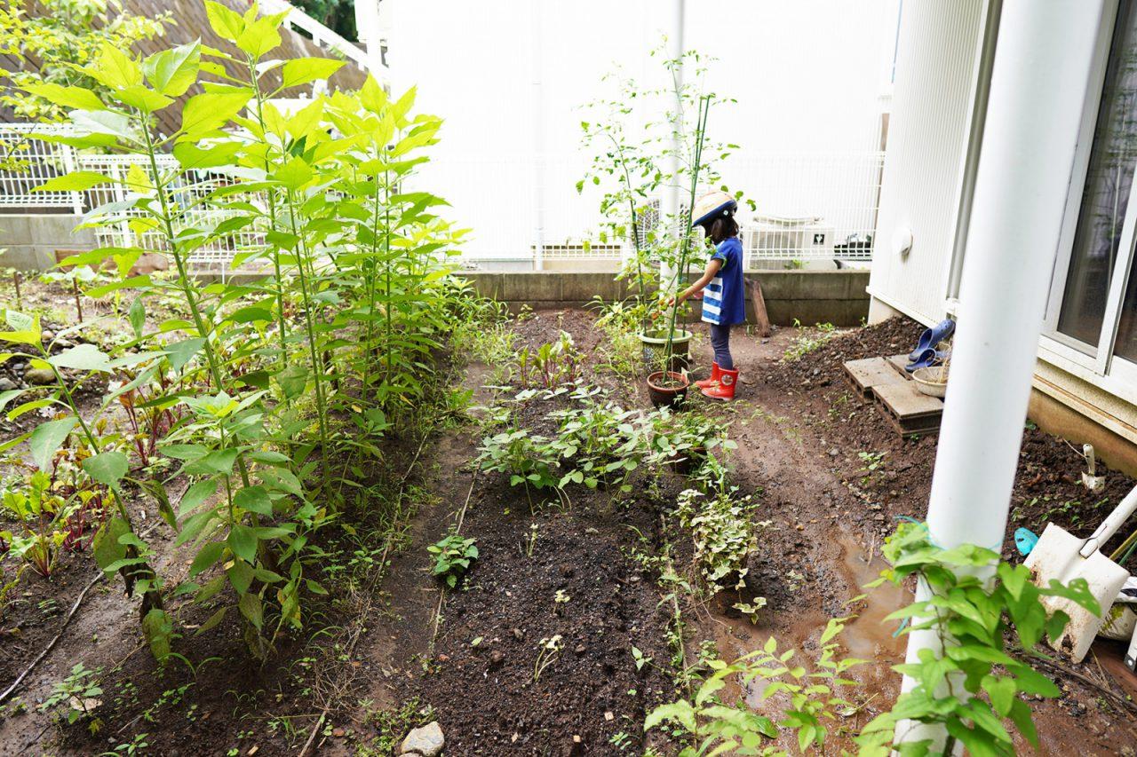庭の畑は畝がある本格的な造り