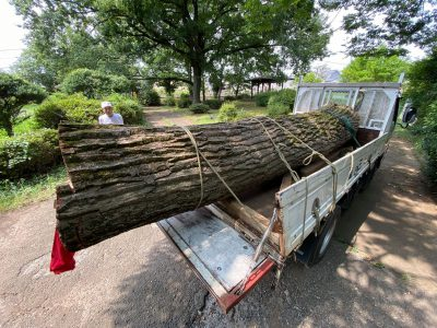 公園の伐採樹木利活用にわくわく!